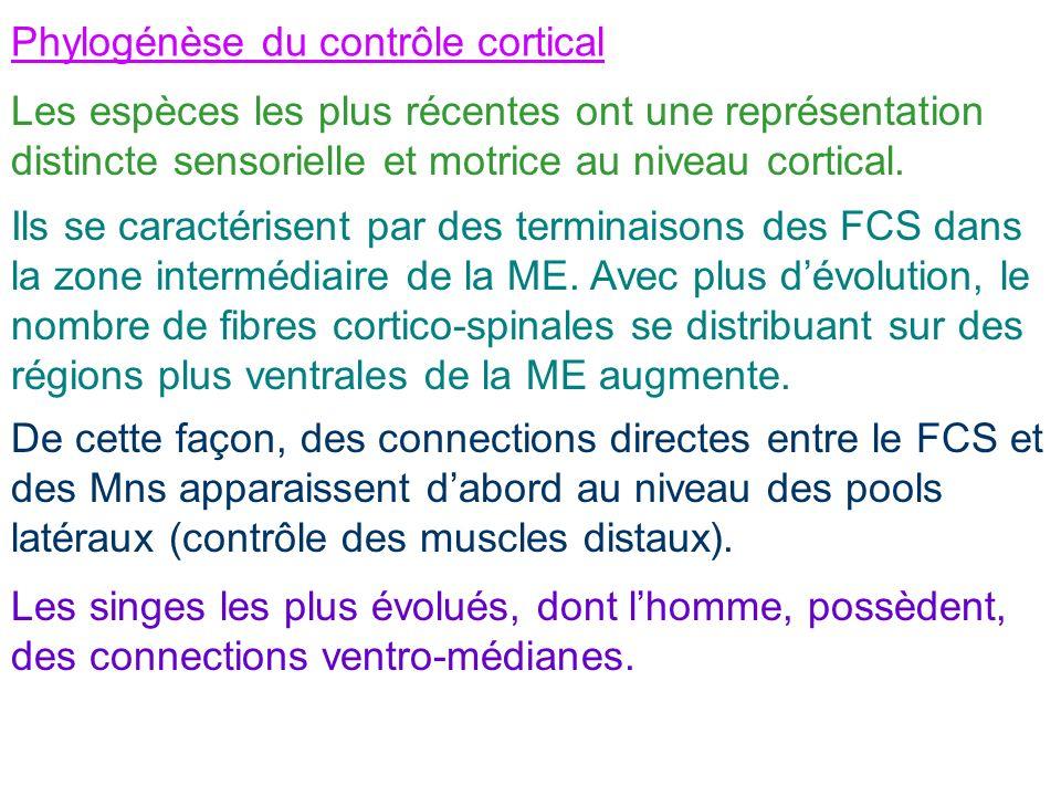 Phylogénèse du contrôle cortical