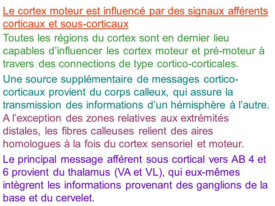 Le cortex moteur est influencé par des signaux afférents corticaux et sous-corticaux