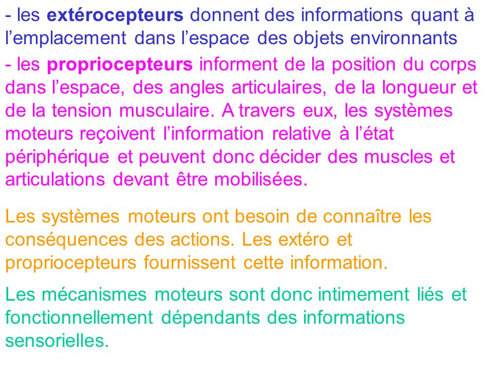 - les extérocepteurs donnent des informations quant à l'emplacement dans l'espace des objets environnants