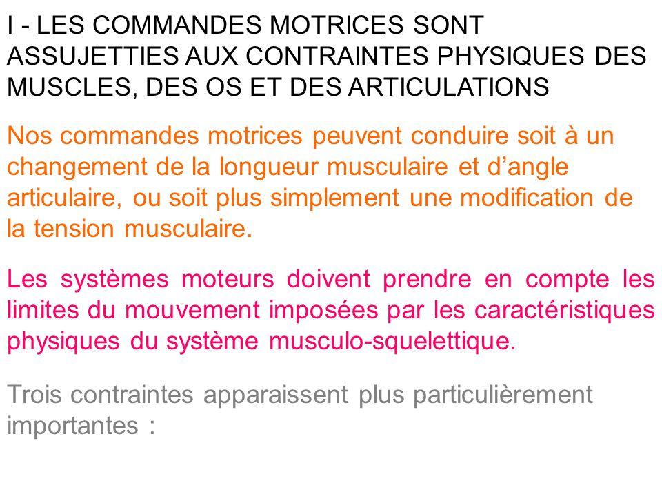 I - LES COMMANDES MOTRICES SONT ASSUJETTIES AUX CONTRAINTES PHYSIQUES DES MUSCLES, DES OS ET DES ARTICULATIONS
