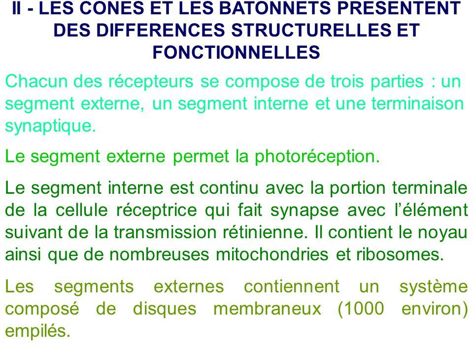 II - LES CONES ET LES BATONNETS PRESENTENT DES DIFFERENCES STRUCTURELLES ET FONCTIONNELLES