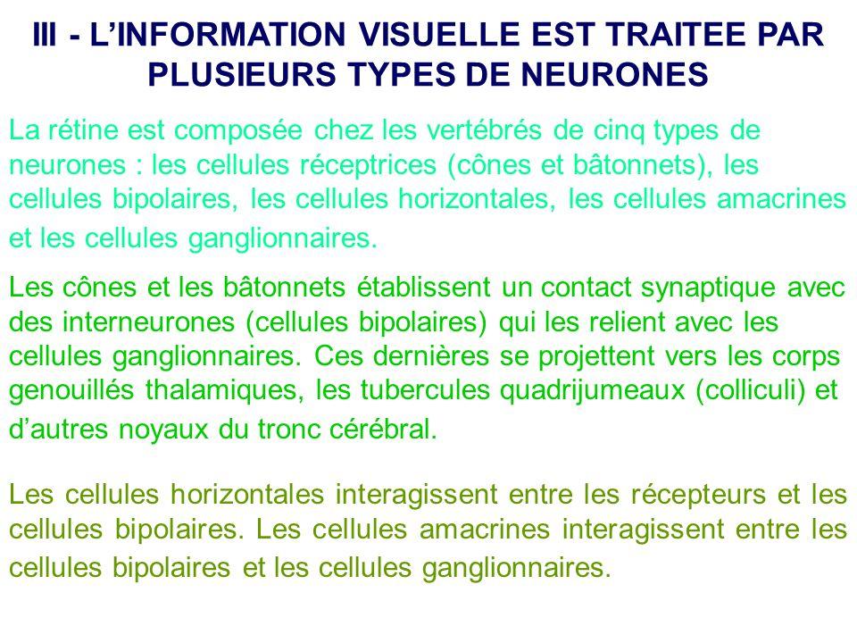 III - L'INFORMATION VISUELLE EST TRAITEE PAR PLUSIEURS TYPES DE NEURONES