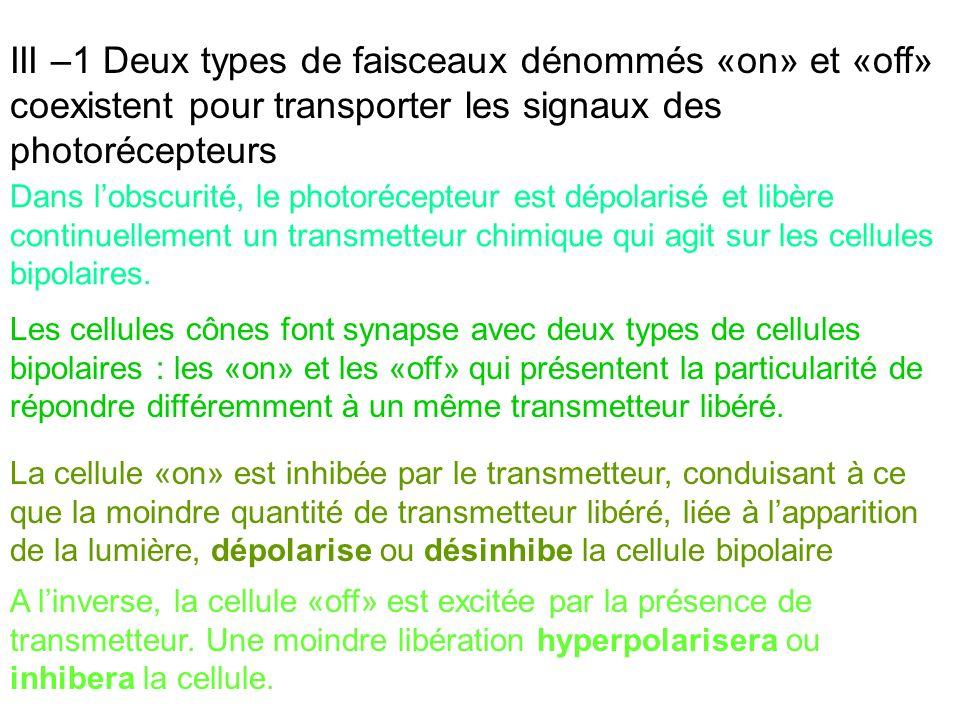 III –1 Deux types de faisceaux dénommés «on» et «off» coexistent pour transporter les signaux des photorécepteurs