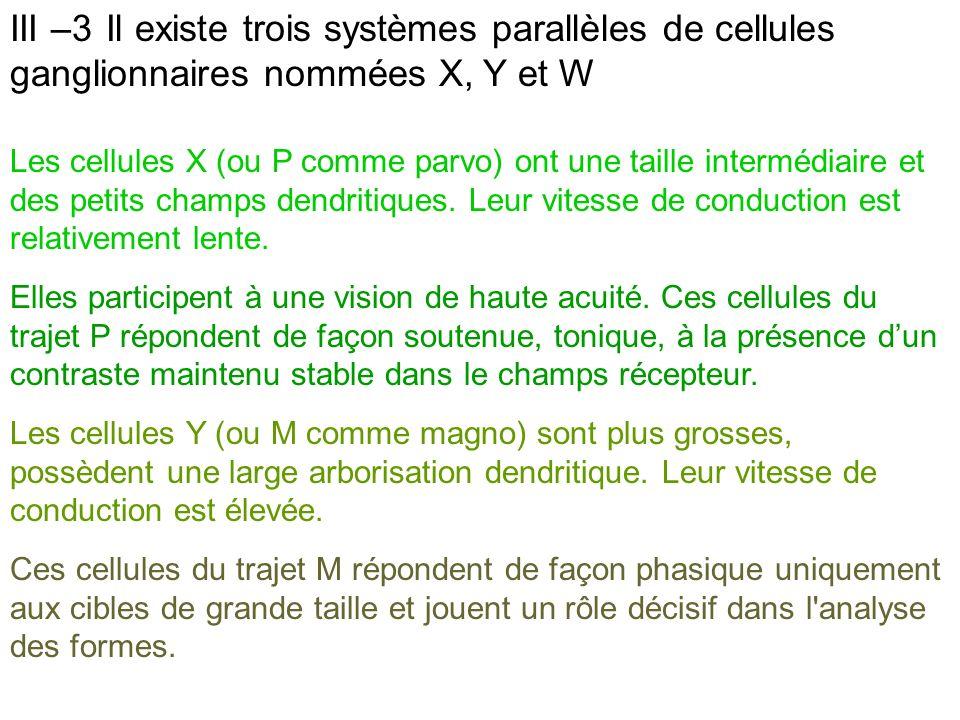 III –3 Il existe trois systèmes parallèles de cellules ganglionnaires nommées X, Y et W
