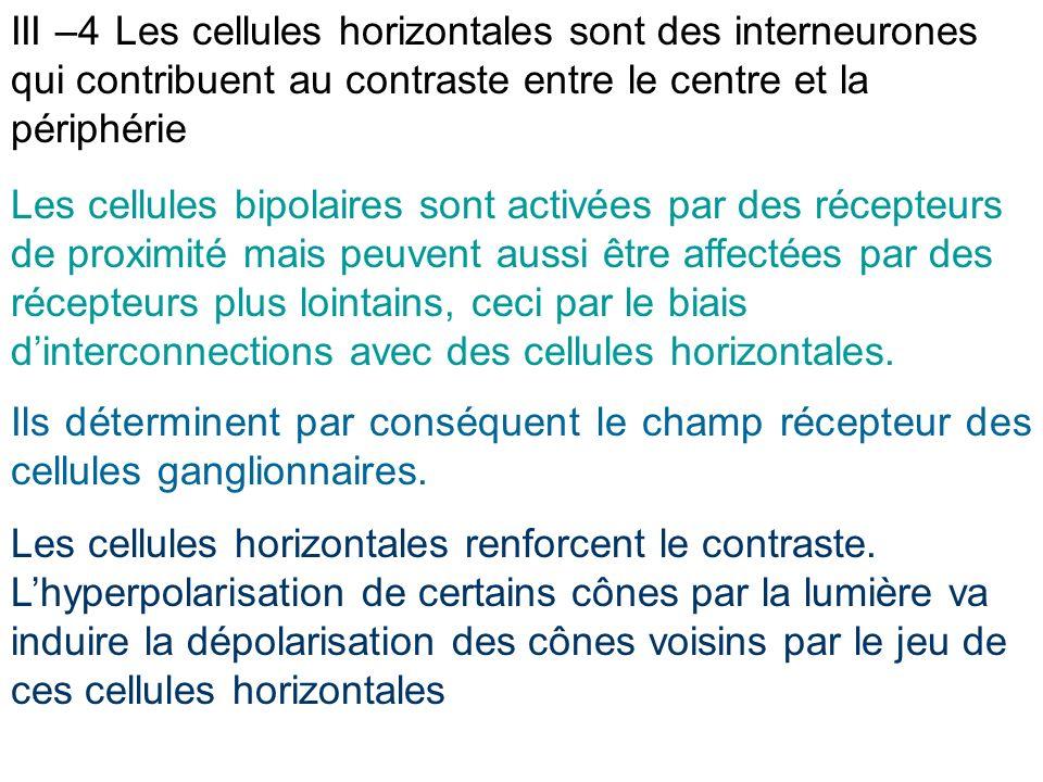 III –4 Les cellules horizontales sont des interneurones qui contribuent au contraste entre le centre et la périphérie