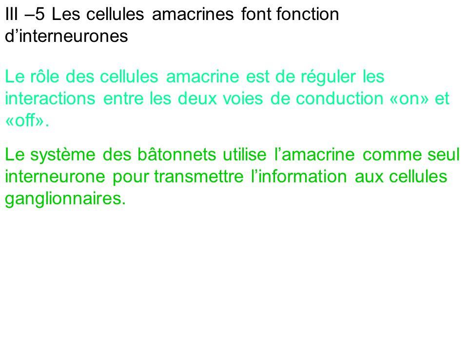 III –5 Les cellules amacrines font fonction d'interneurones