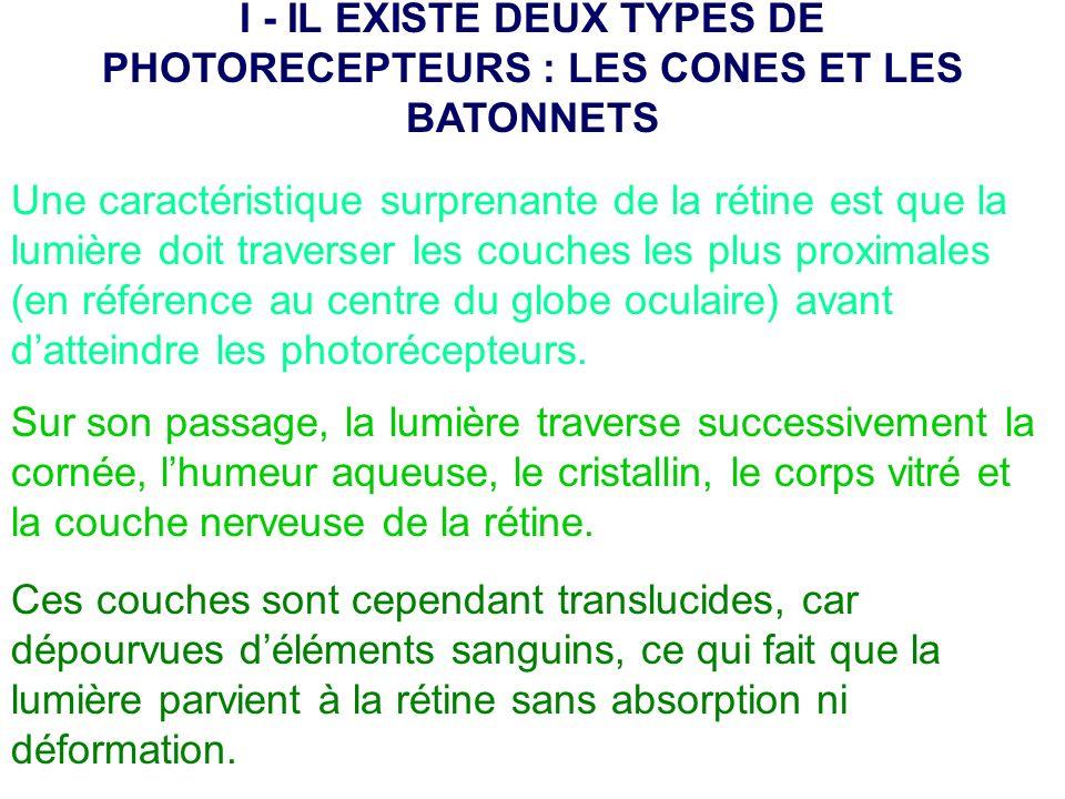 I - IL EXISTE DEUX TYPES DE PHOTORECEPTEURS : LES CONES ET LES BATONNETS