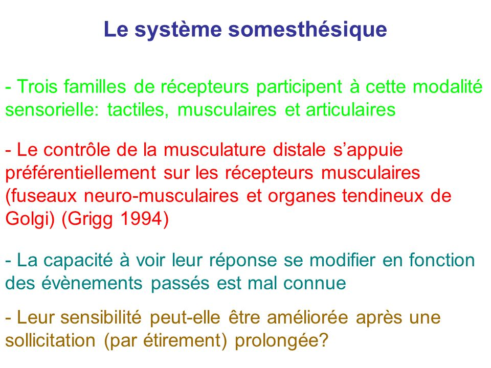 Le système somesthésique