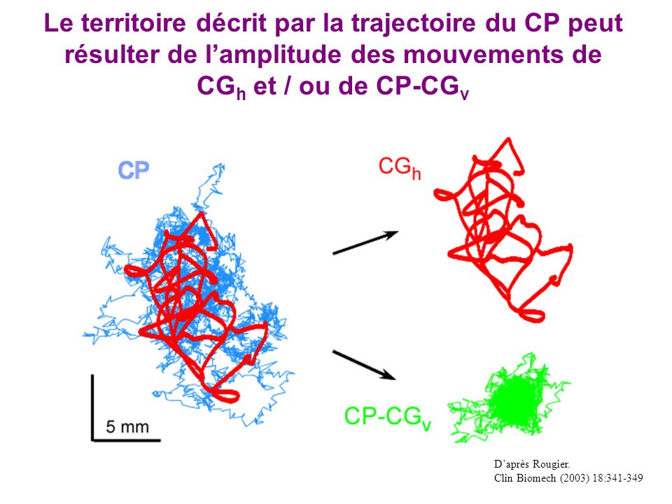 Le territoire décrit par la trajectoire du CP peut résulter de l'amplitude des mouvements de CGh et / ou de CP-CGv