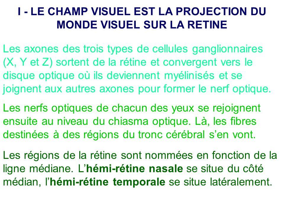 I - LE CHAMP VISUEL EST LA PROJECTION DU MONDE VISUEL SUR LA RETINE