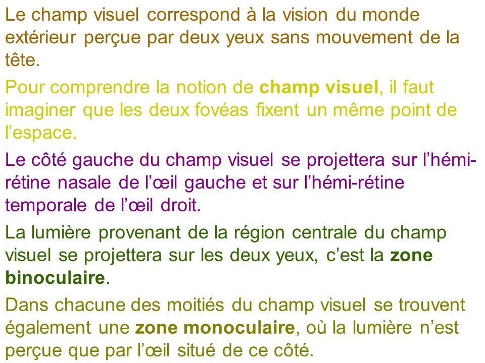 Le champ visuel correspond à la vision du monde extérieur perçue par deux yeux sans mouvement de la tête.