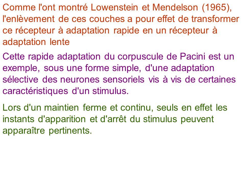 Comme l ont montré Lowenstein et Mendelson (1965), l enlèvement de ces couches a pour effet de transformer ce récepteur à adaptation rapide en un récepteur à adaptation lente
