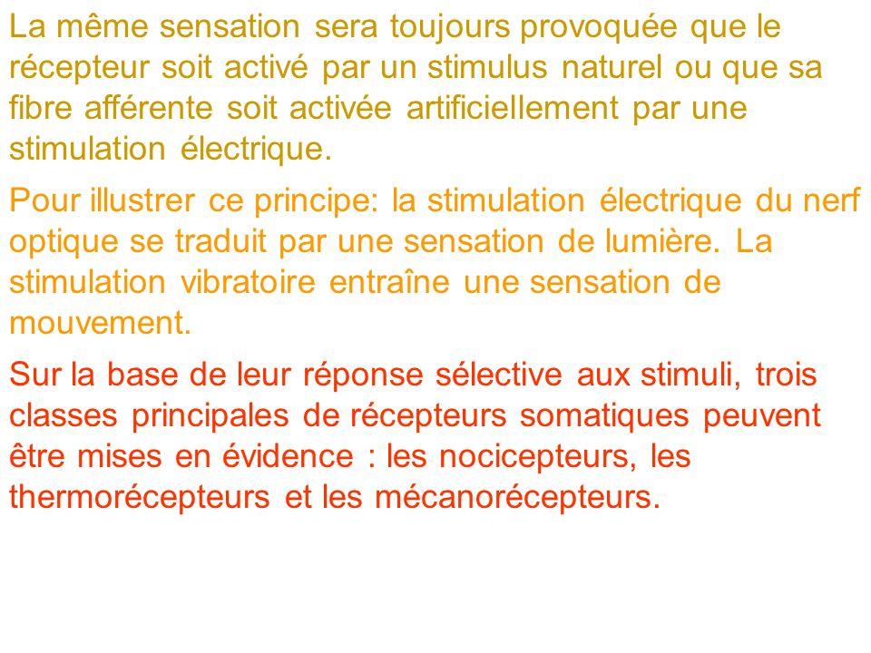 La même sensation sera toujours provoquée que le récepteur soit activé par un stimulus naturel ou que sa fibre afférente soit activée artificiellement par une stimulation électrique.