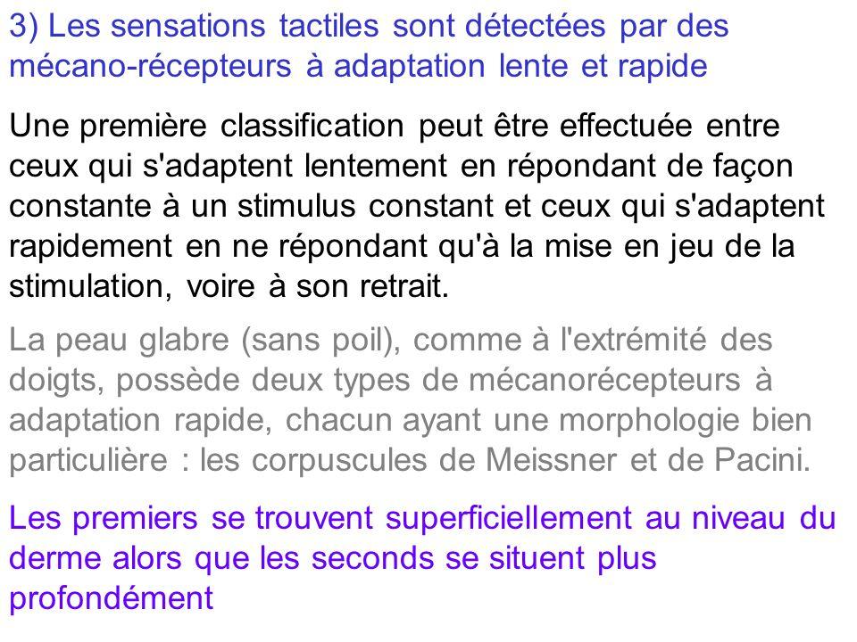 3) Les sensations tactiles sont détectées par des mécano-récepteurs à adaptation lente et rapide