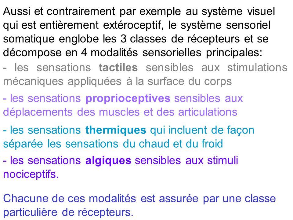 Aussi et contrairement par exemple au système visuel qui est entièrement extéroceptif, le système sensoriel somatique englobe les 3 classes de récepteurs et se décompose en 4 modalités sensorielles principales: