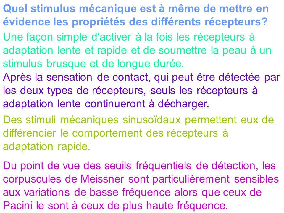 Quel stimulus mécanique est à même de mettre en évidence les propriétés des différents récepteurs