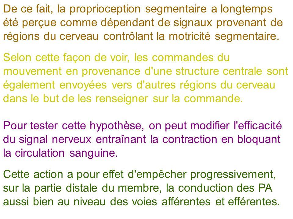 De ce fait, la proprioception segmentaire a longtemps été perçue comme dépendant de signaux provenant de régions du cerveau contrôlant la motricité segmentaire.