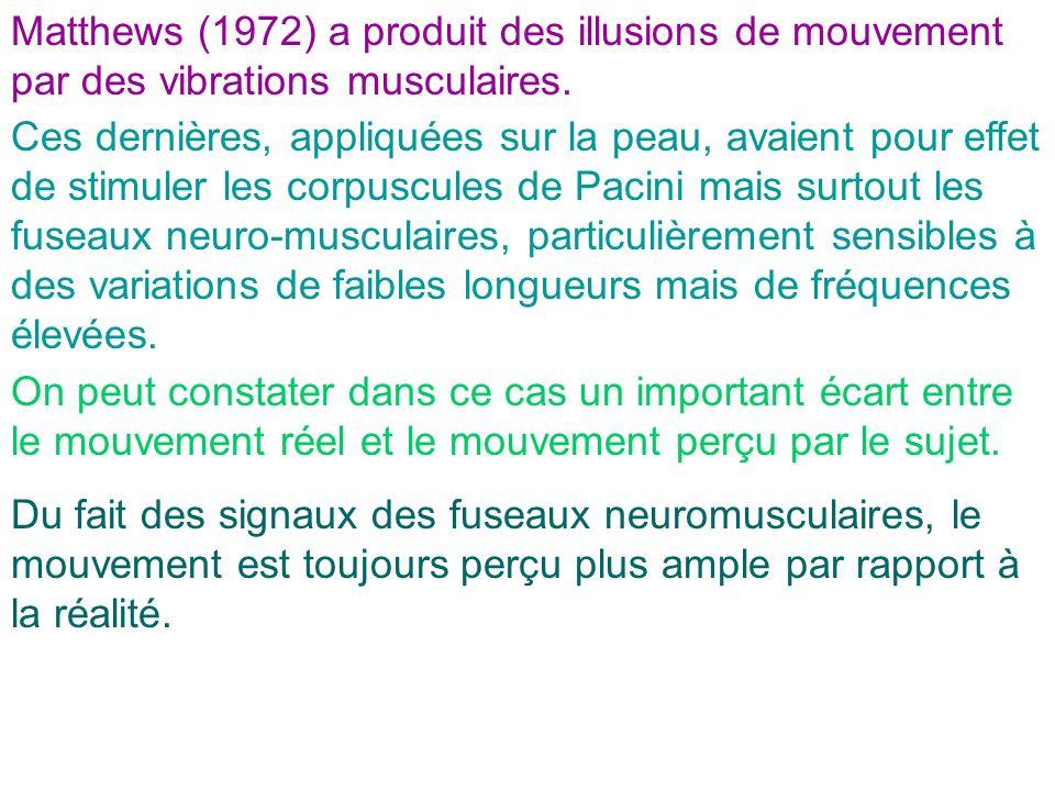 Matthews (1972) a produit des illusions de mouvement par des vibrations musculaires.