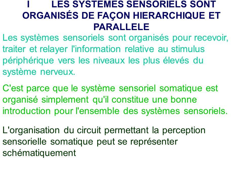 I LES SYSTEMES SENSORIELS SONT ORGANISÉS DE FAÇON HIERARCHIQUE ET PARALLELE