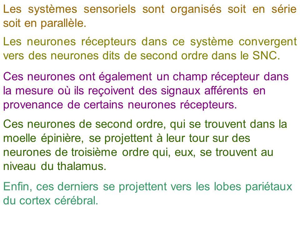 Les systèmes sensoriels sont organisés soit en série soit en parallèle.