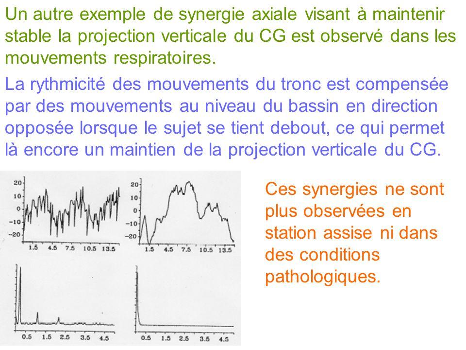 Un autre exemple de synergie axiale visant à maintenir stable la projection verticale du CG est observé dans les mouvements respiratoires.