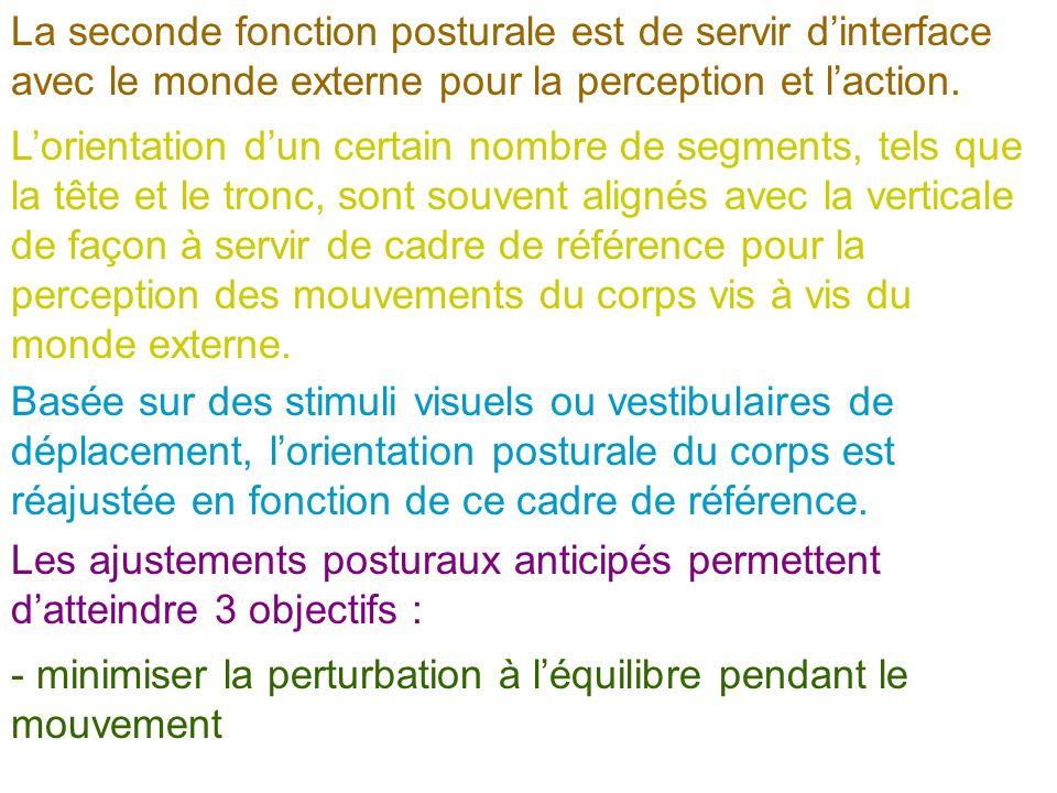 La seconde fonction posturale est de servir d'interface avec le monde externe pour la perception et l'action.