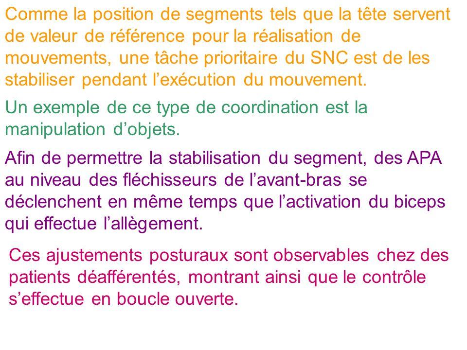 Comme la position de segments tels que la tête servent de valeur de référence pour la réalisation de mouvements, une tâche prioritaire du SNC est de les stabiliser pendant l'exécution du mouvement.