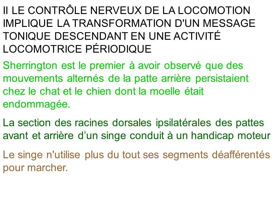II LE CONTRÔLE NERVEUX DE LA LOCOMOTION IMPLIQUE LA TRANSFORMATION D UN MESSAGE TONIQUE DESCENDANT EN UNE ACTIVITÉ LOCOMOTRICE PÉRIODIQUE