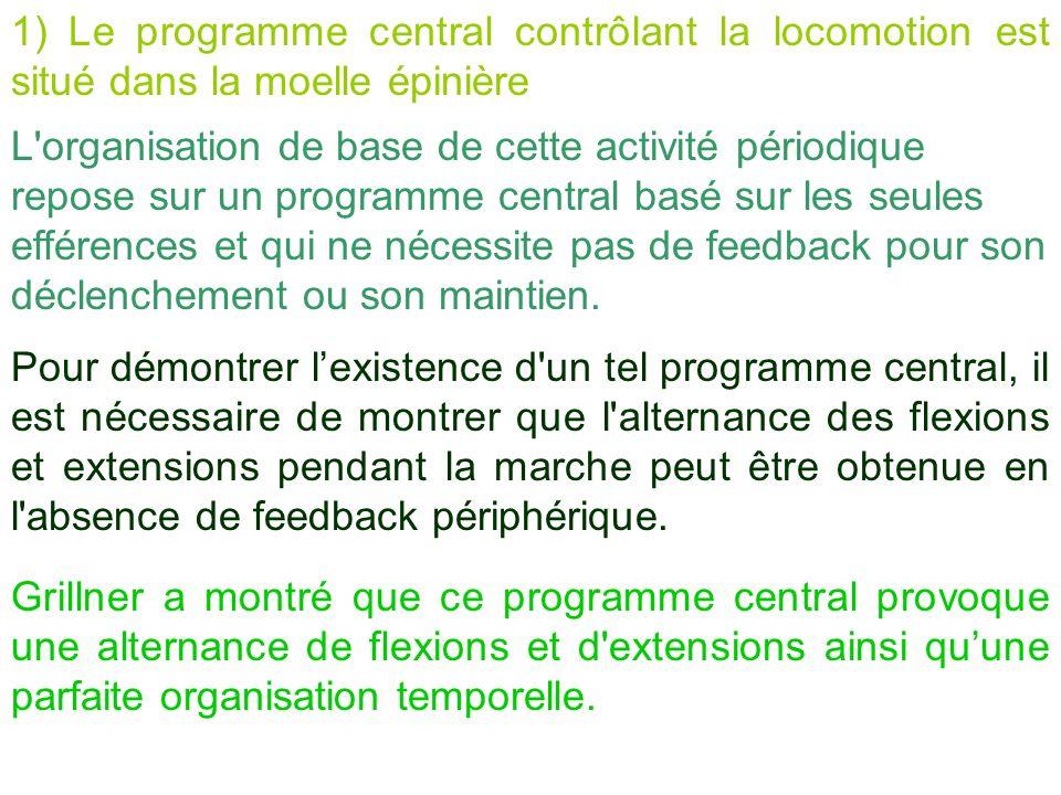 1) Le programme central contrôlant la locomotion est situé dans la moelle épinière