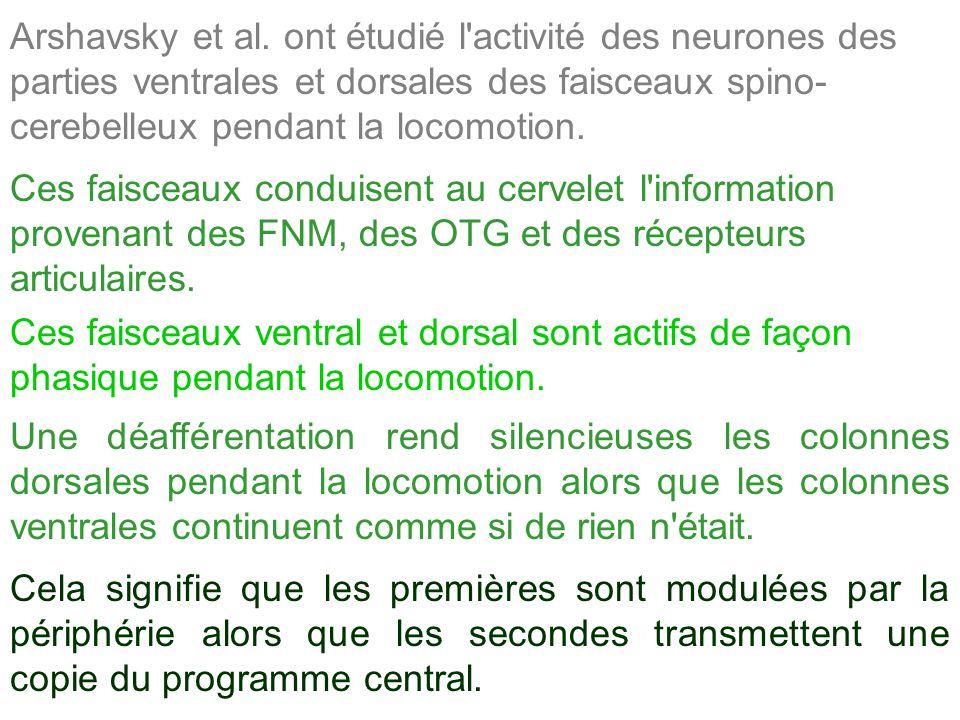 Arshavsky et al. ont étudié l activité des neurones des parties ventrales et dorsales des faisceaux spino-cerebelleux pendant la locomotion.