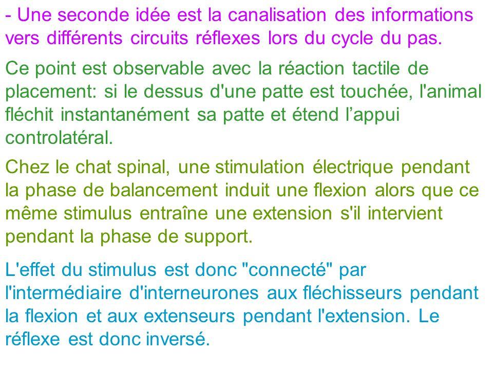 - Une seconde idée est la canalisation des informations vers différents circuits réflexes lors du cycle du pas.