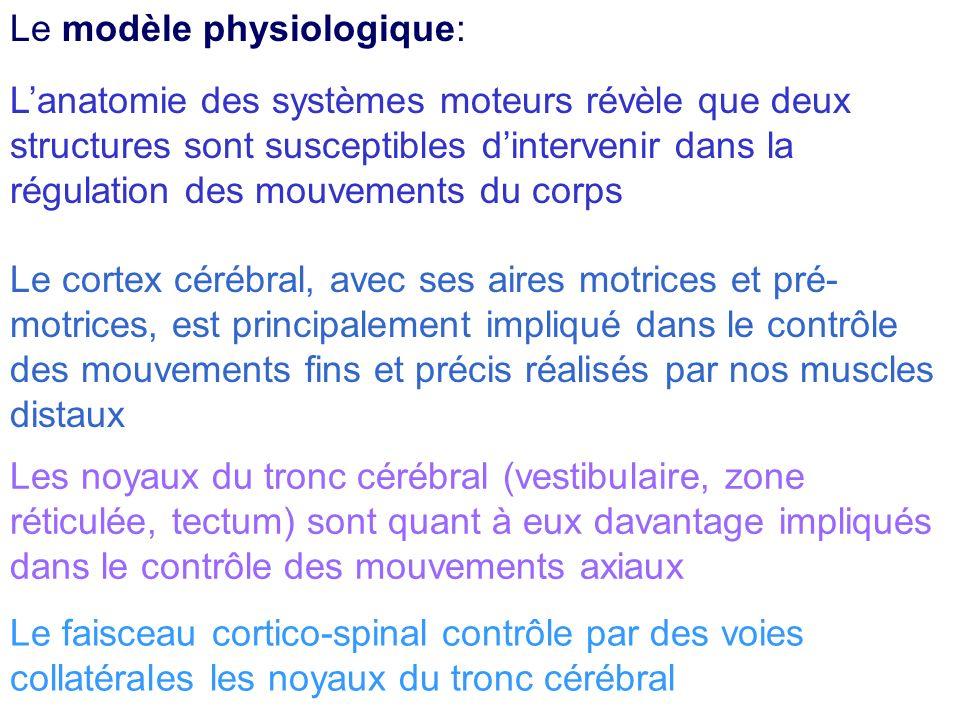 Le modèle physiologique: