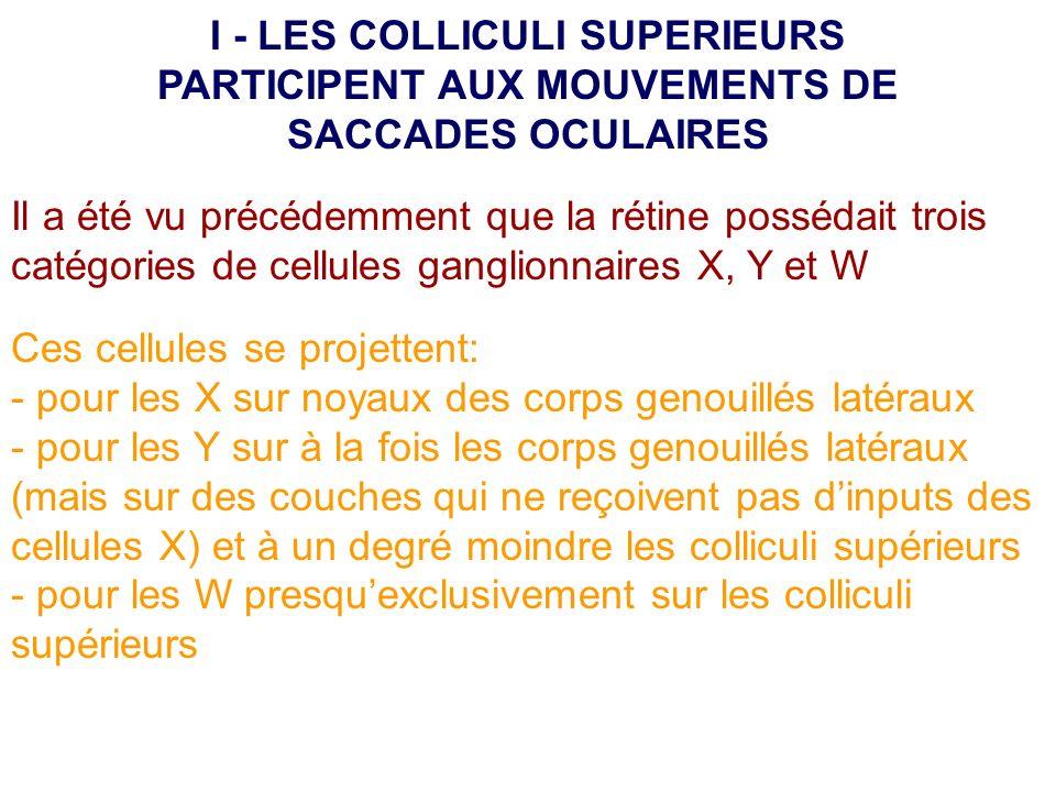 I - LES COLLICULI SUPERIEURS PARTICIPENT AUX MOUVEMENTS DE SACCADES OCULAIRES
