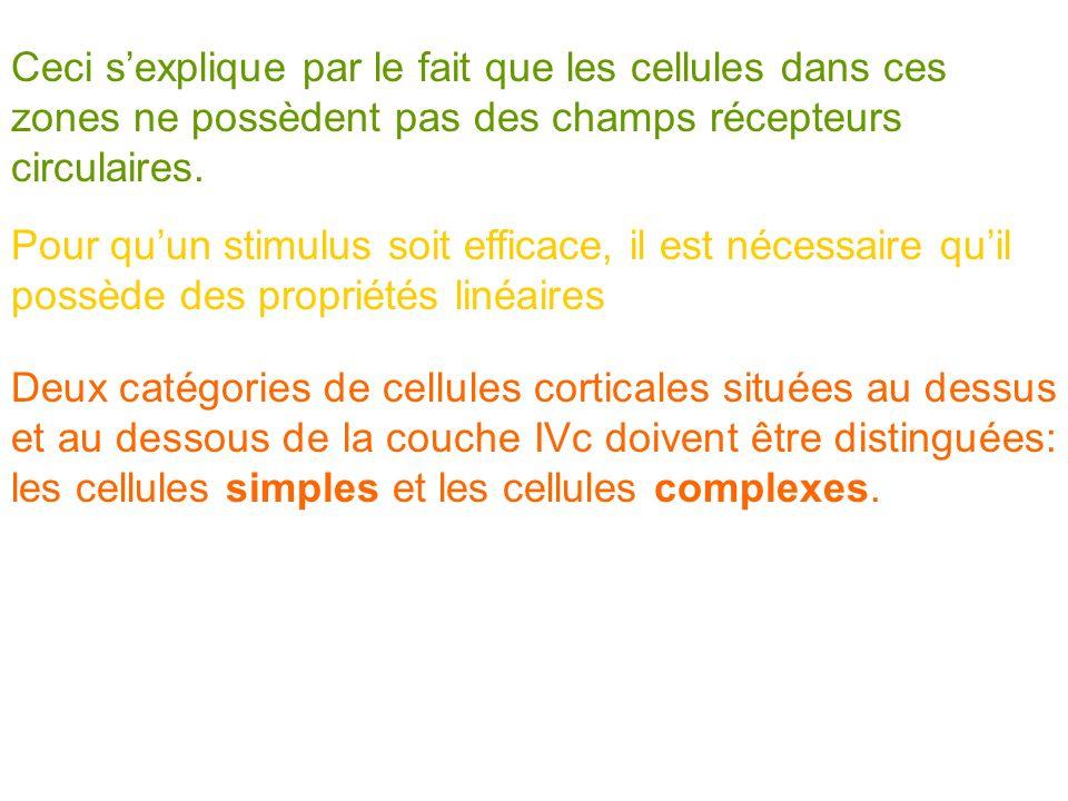 Ceci s'explique par le fait que les cellules dans ces zones ne possèdent pas des champs récepteurs circulaires.