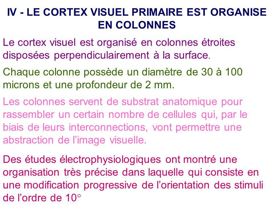 IV - LE CORTEX VISUEL PRIMAIRE EST ORGANISE EN COLONNES