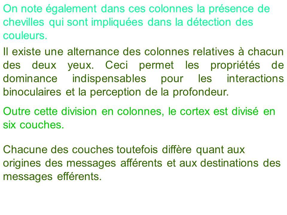 On note également dans ces colonnes la présence de chevilles qui sont impliquées dans la détection des couleurs.