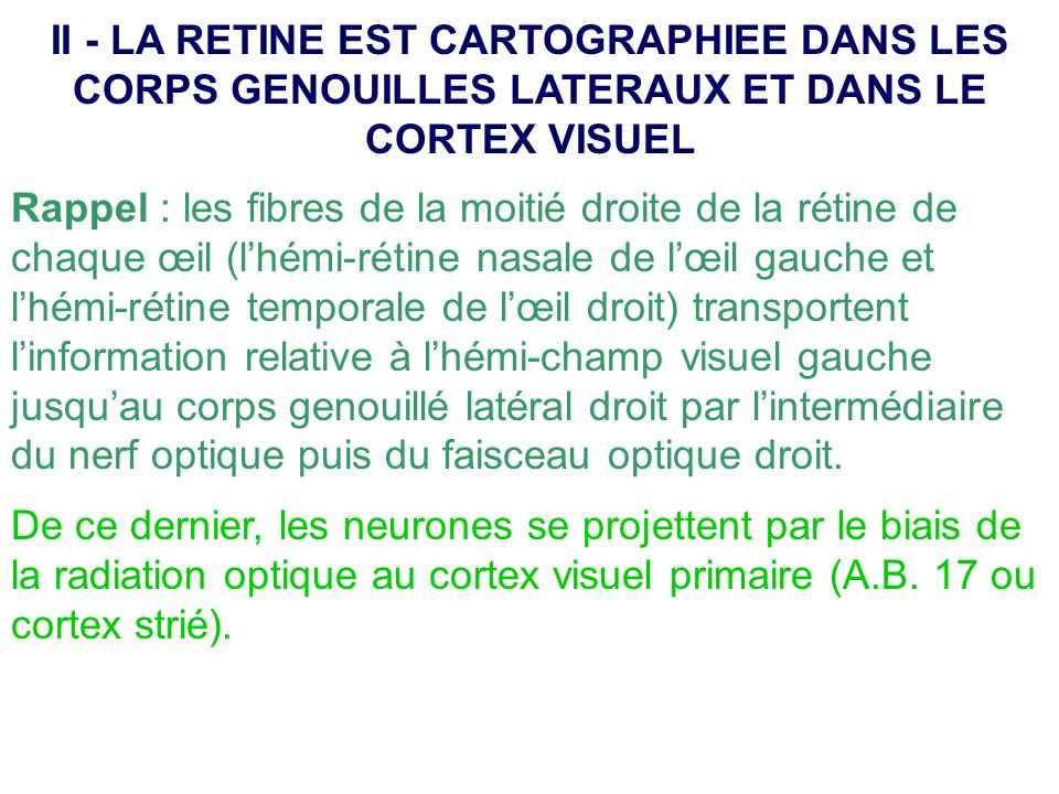 II - LA RETINE EST CARTOGRAPHIEE DANS LES CORPS GENOUILLES LATERAUX ET DANS LE CORTEX VISUEL