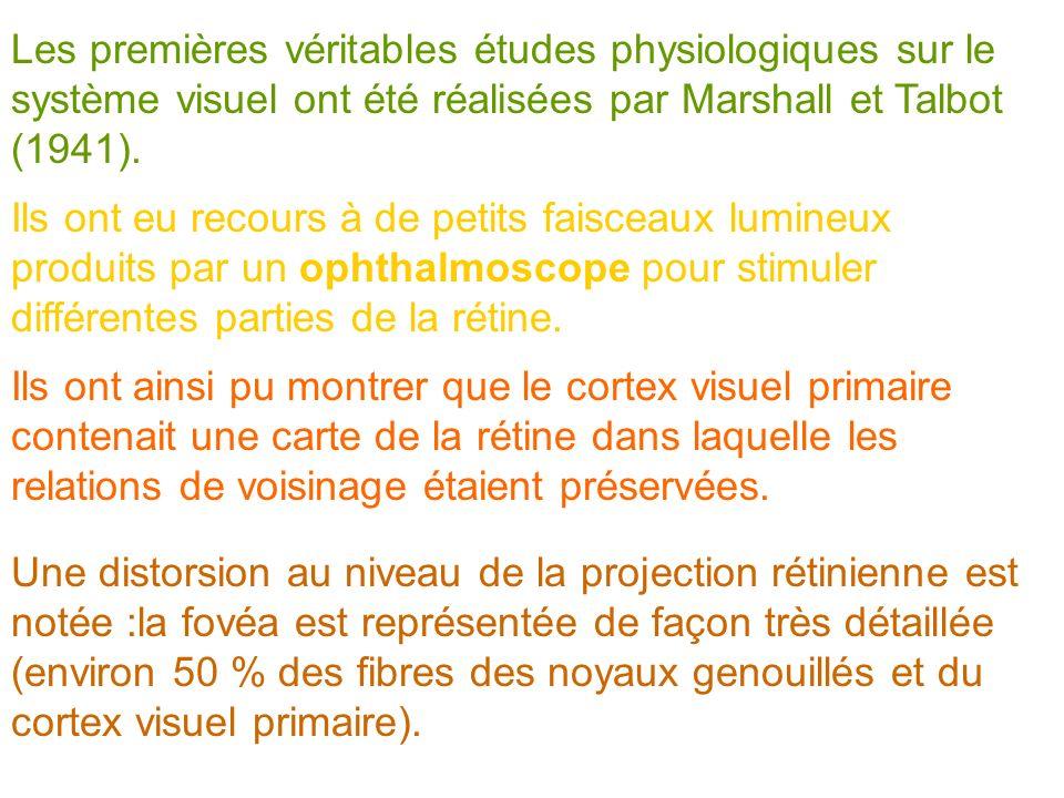 Les premières véritables études physiologiques sur le système visuel ont été réalisées par Marshall et Talbot (1941).