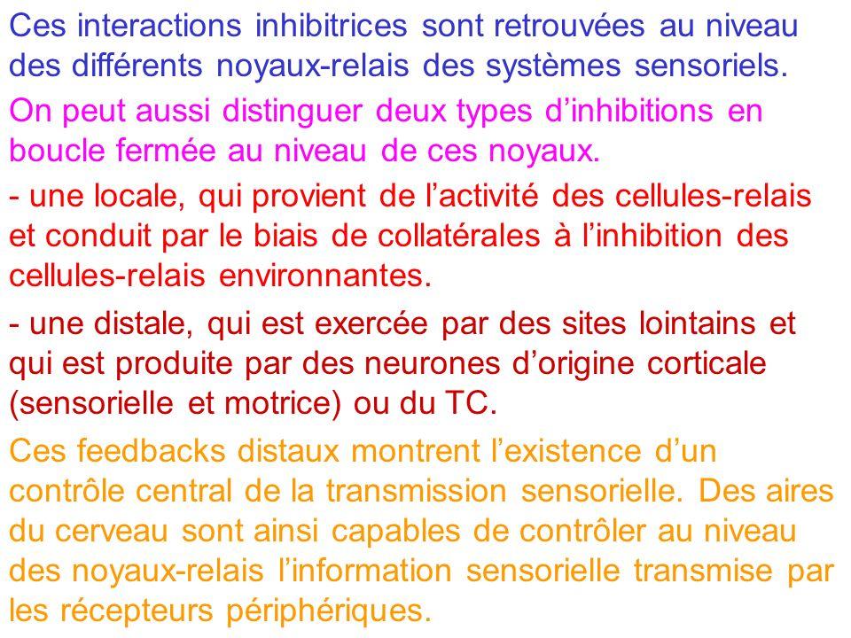 Ces interactions inhibitrices sont retrouvées au niveau des différents noyaux-relais des systèmes sensoriels.