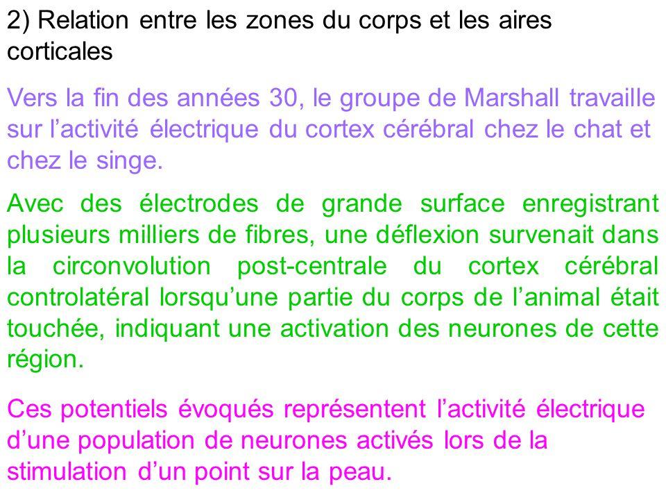 2) Relation entre les zones du corps et les aires corticales
