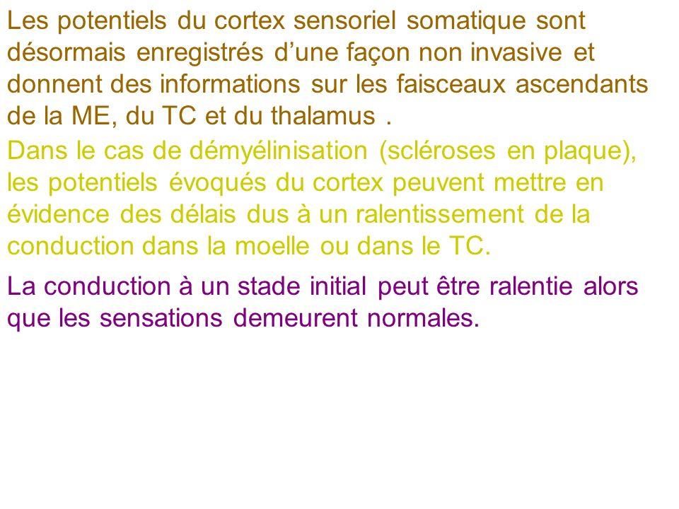 Les potentiels du cortex sensoriel somatique sont désormais enregistrés d'une façon non invasive et donnent des informations sur les faisceaux ascendants de la ME, du TC et du thalamus .