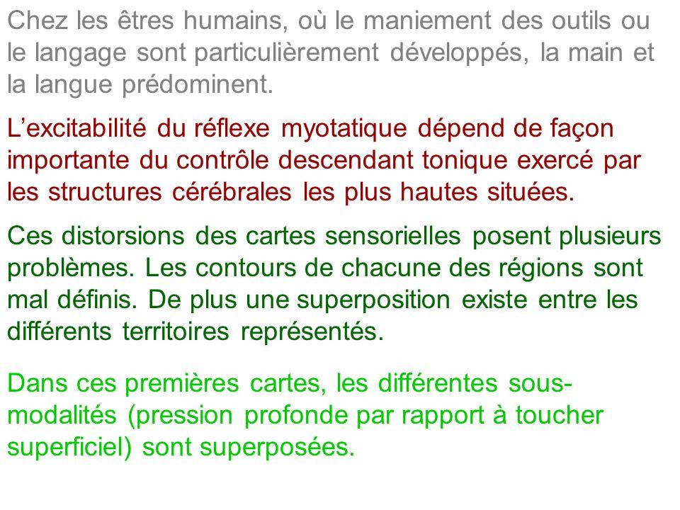 Chez les êtres humains, où le maniement des outils ou le langage sont particulièrement développés, la main et la langue prédominent.