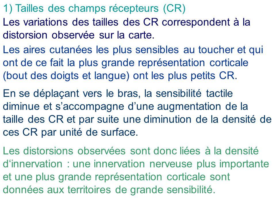 1) Tailles des champs récepteurs (CR)