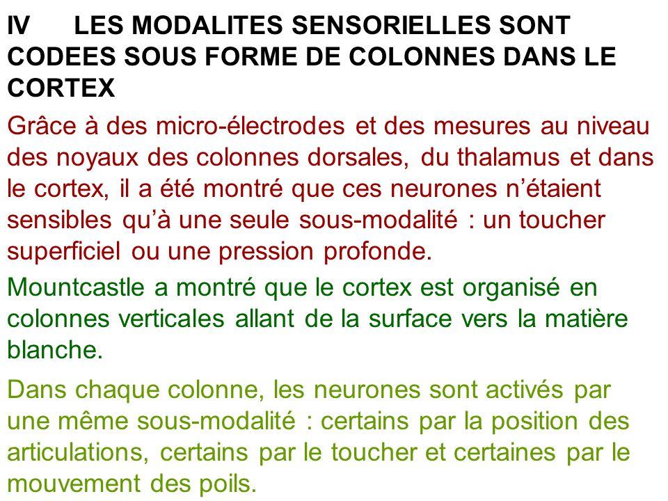 IV LES MODALITES SENSORIELLES SONT CODEES SOUS FORME DE COLONNES DANS LE CORTEX