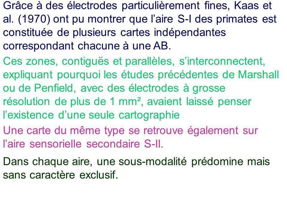 Grâce à des électrodes particulièrement fines, Kaas et al