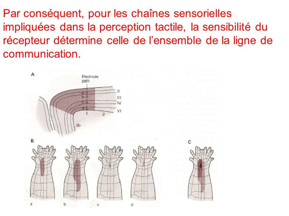 Par conséquent, pour les chaînes sensorielles impliquées dans la perception tactile, la sensibilité du récepteur détermine celle de l'ensemble de la ligne de communication.