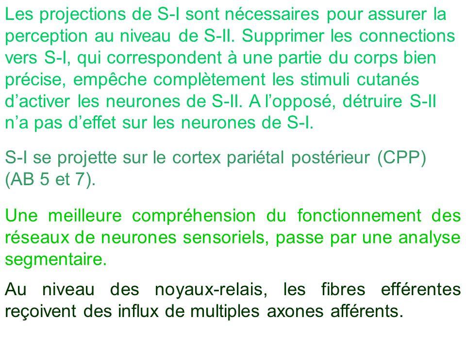 Les projections de S-I sont nécessaires pour assurer la perception au niveau de S-II. Supprimer les connections vers S-I, qui correspondent à une partie du corps bien précise, empêche complètement les stimuli cutanés d'activer les neurones de S-II. A l'opposé, détruire S-II n'a pas d'effet sur les neurones de S-I.