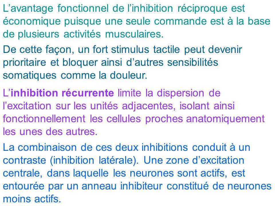 L'avantage fonctionnel de l'inhibition réciproque est économique puisque une seule commande est à la base de plusieurs activités musculaires.