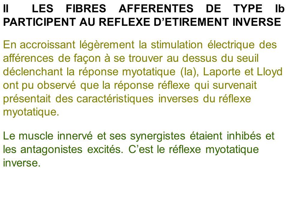 II LES FIBRES AFFERENTES DE TYPE Ib PARTICIPENT AU REFLEXE D'ETIREMENT INVERSE