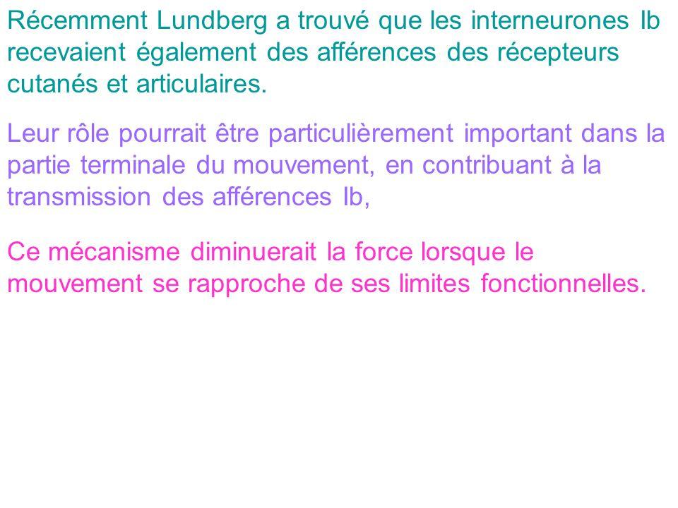Récemment Lundberg a trouvé que les interneurones Ib recevaient également des afférences des récepteurs cutanés et articulaires.